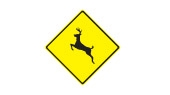 deer frequently cross